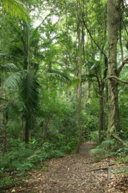 Explore on the Rainforest walk, a short walk from Cedar Grove camping area. Photo: Ross Naumann, QPWS volunteer.