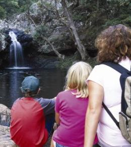 Rock pool above Kondalilla Falls on the Kondalilla Falls circuit. Photo: Queensland Government.