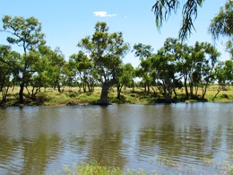 Trees stabilise the banks and trap nutrients. Photo: Gary Featonby, Queensland Government.