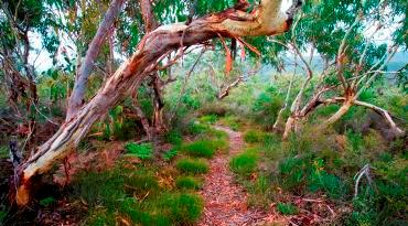 The best way to explore the coastal habitats of Minjerribah is on foot. Photo: Queensland Government.