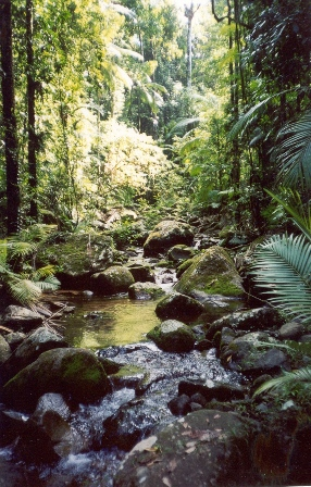 Rainforest creek, Koolmoon Creek track. Photo: Queensland Government