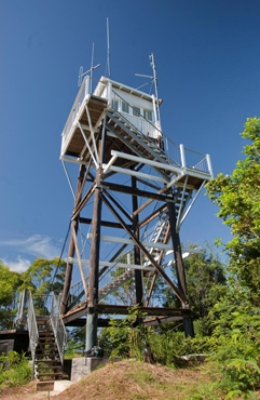 A detour from the Great Walk leads to Mount Allan fire tower. Photo: Robert Ashdown, Queensland Government.