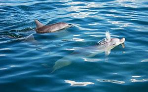 Australian Humpback dolphin and Bottlenose dolphin.