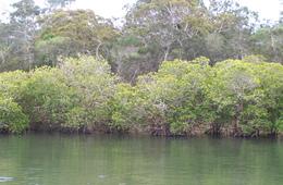 Fish habitats of Kauri Creek