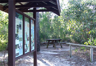 Searys Creek. Picnic in the bush at one of the smaller day-use areas in Cooloola. Photo: Queensland Government