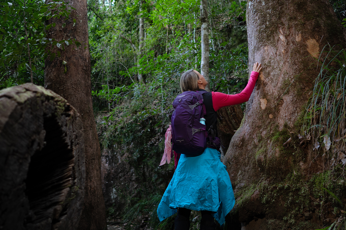 A hiker in warm hiking gear reaches up to touch a large tree.