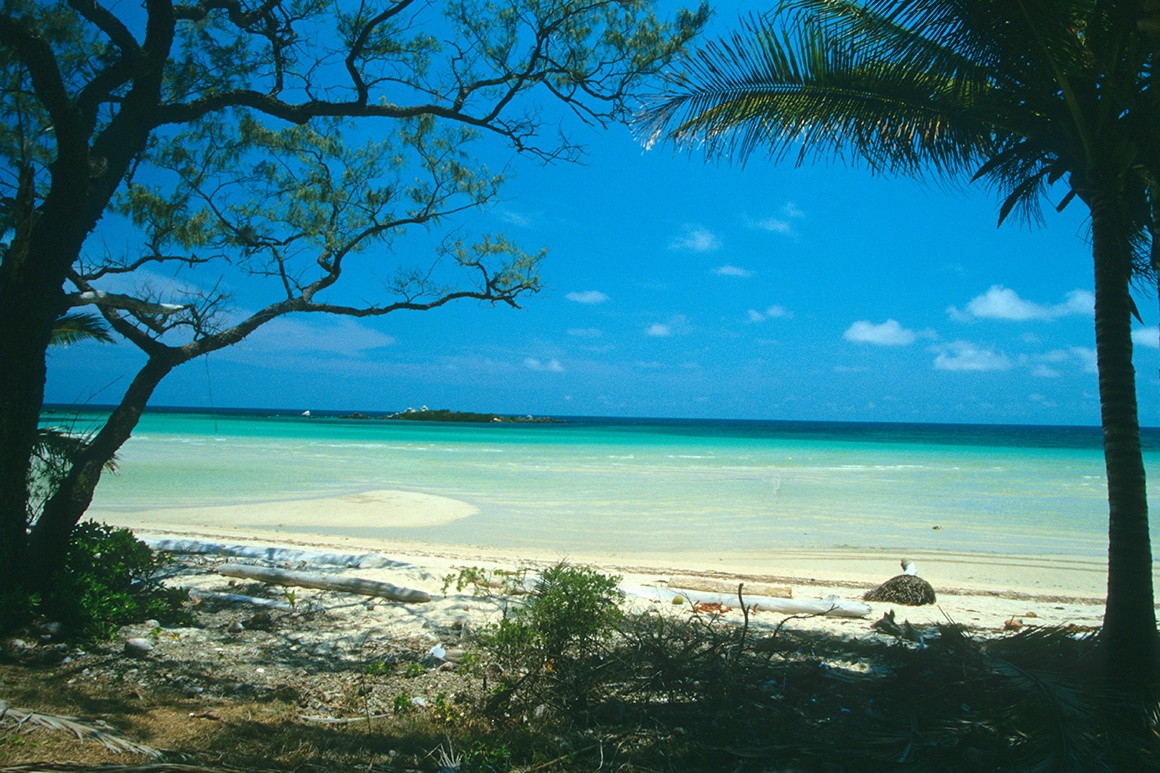 White sandy beach is dotted with boulders and fringed with palms, with a backdrop of distant headland.