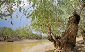 The Paroo River is the perfect place to camp, picnic, birdwatch or fish. Photo: Robert Ashdown © Queensland Government