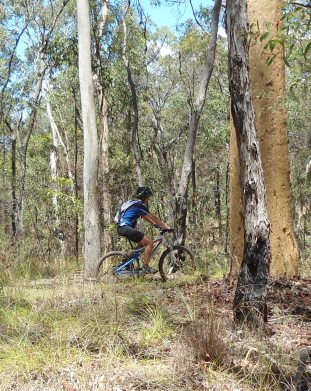 There is a range of riding opportunities in Nerang National Park. Photo: Kirstin Beasley, Queensland Government.
