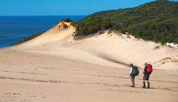 Absorb the open surrounds and views while crossing the Cooloola sandpatch.