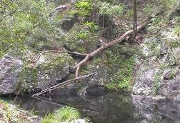 Branch Creek. Photo: Queensland Government.