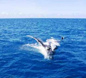 Look for migrating humpback whales. Photo: Queensland Government.