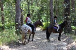 Horseriders on the Ironbark trail. Photo: Ross Naumann, QPWS Volunteer.