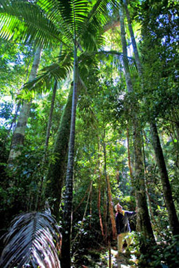Photo of towering trees in teh rainforest.