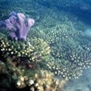 Image of Coral in Moreton Bay Marine Park.