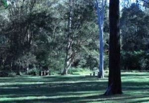 Bunyaville's open grassy areas are a great place for a relaxing picnic. Photo: Queensland Government.